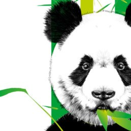 La relación entre 3M y el cuidado de los Pandas